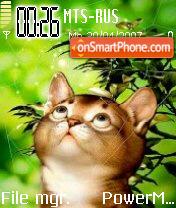 Cat 04 es el tema de pantalla