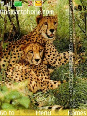 Скриншот темы Cheetah 03