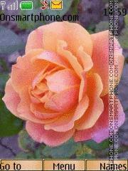 Rose 04 tema screenshot