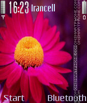 Flower 2 es el tema de pantalla
