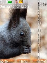 Squirrel 01 es el tema de pantalla