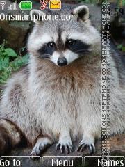 Raccoon 02 tema screenshot