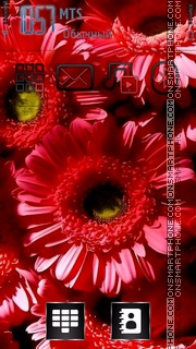 Red Gerbera theme screenshot