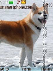 Akita Inu es el tema de pantalla