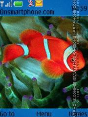Скриншот темы Clown fish