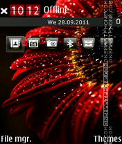 Red flower 05 theme screenshot