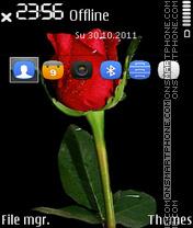 Nice Red Rose es el tema de pantalla