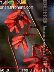 Скриншот темы Red Leaves 01