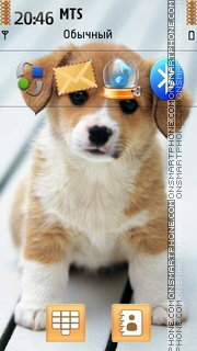 Little Dog 01 theme screenshot