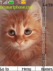 Curious Red Kitten tema screenshot