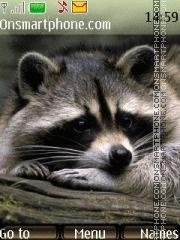 Raccoon 03 es el tema de pantalla