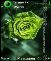 Green Rose es el tema de pantalla