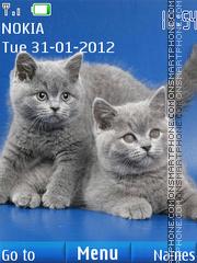 British Shorthair Kittens tema screenshot