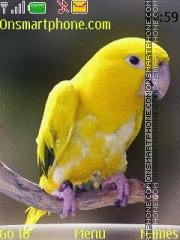 Cute Parrot theme screenshot