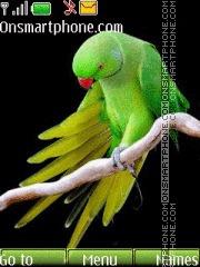 Green Parrot 01 theme screenshot