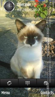 Tommy Cat theme screenshot