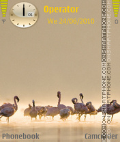 Flamingo by amjad theme screenshot