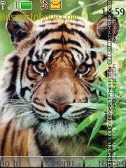 Tiger In Grass 01 es el tema de pantalla