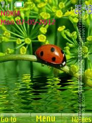 Скриншот темы Ladybug 03