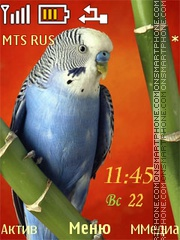 Budgerigar Theme-Screenshot
