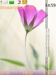 Tender flower theme screenshot