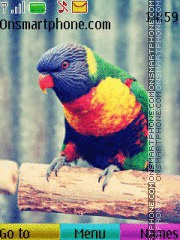 Colourful Parrot es el tema de pantalla