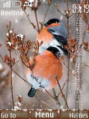 Bullfinches in winter theme screenshot