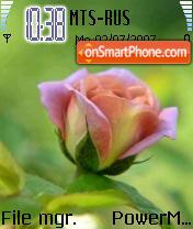 Pink Rose 01 theme screenshot