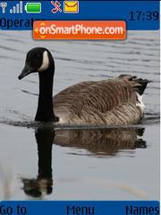 Duck 1 theme screenshot