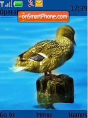 Скриншот темы Duck 02
