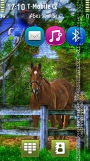 Horse 11 Theme-Screenshot