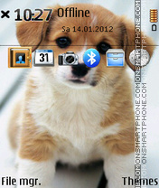 Little Dog 03 es el tema de pantalla