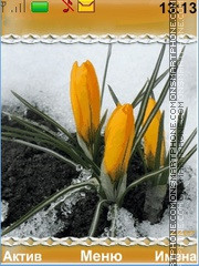 Crocuses in snow theme screenshot