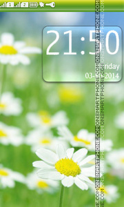 Field of Daisies theme screenshot