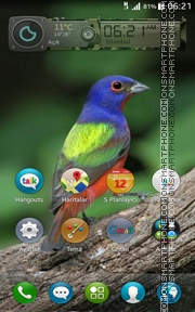 Nicebird tema screenshot