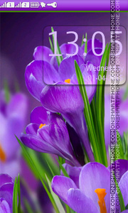 Crocus Purple Flowers theme screenshot
