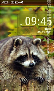 Raccoon 04 Theme-Screenshot