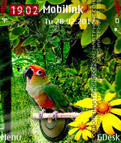 Colorful Parrot tema screenshot