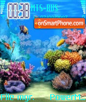 Marine Life es el tema de pantalla