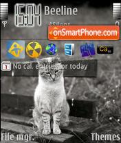 Cats 03 theme screenshot