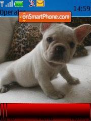 Frenchbulldogs theme screenshot