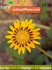Yellow Sun Flower theme screenshot