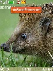 Hedgehog es el tema de pantalla