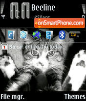 Black To White Cat Edition theme screenshot