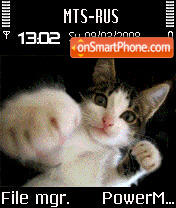 Animated Boxing Cat S60v2 es el tema de pantalla
