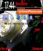 Wite roze in blask v1 es el tema de pantalla