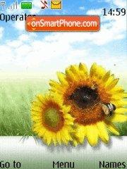 Sunflower 02 theme screenshot