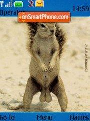 Squirrel Nuts theme screenshot