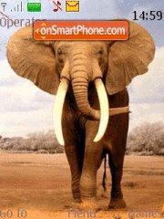 Bull Elephant es el tema de pantalla