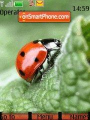 Lady-Bug theme screenshot